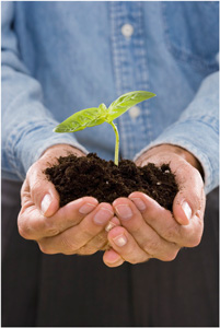 Picture of a person holding dirt and a plant in their hands.